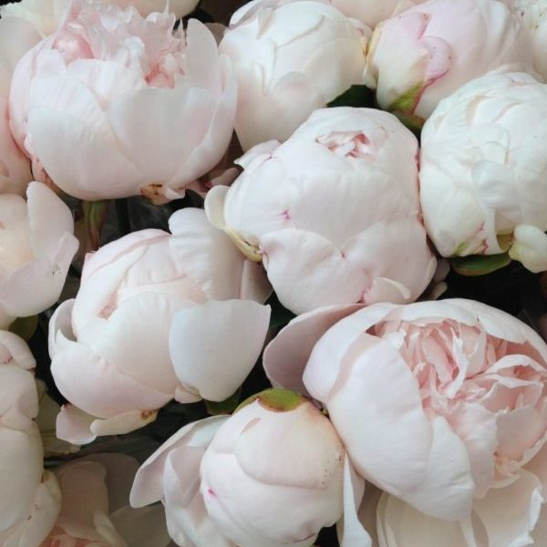 Peony-alternatives-for-your-wedding-white-peonies-768x1024